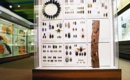 Det Senckenberg museet Royaltyfria Bilder