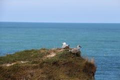 Det ser ser seagullen fortfarande in i avst?ndet och riktningen av maten royaltyfri bild