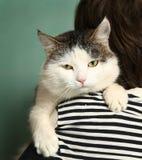 Det Siberian kattslutet tystar ned upp ståenden royaltyfri fotografi