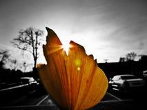 Det sista bladet av hösten Royaltyfri Fotografi