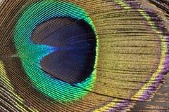 Det skinande ögat av en påfågelfjäder - stäng sig upp arkivbild