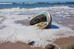 Det skinande pärlemoAbaloneskalet sköljas upp på stranden på stranden Royaltyfria Bilder