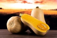 Det släta päronet formade orange waltham för butternutsquash med höstfältet bakom royaltyfri foto