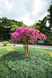 Det slumpmässiga trädet inom Lumphini parkerar, Bangkok Arkivbilder