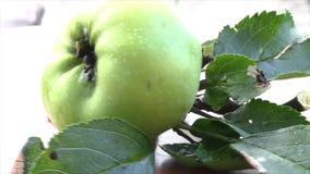 Det smakliga äpplet faller ner från äppleträdet lager videofilmer