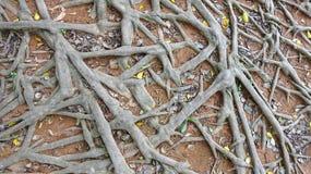 Det smutsiga trädet rotar bakgrundsillustrationen royaltyfria foton