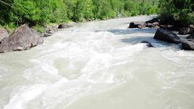 Det snabba och turbulenta flödet av bergfloden Chuya som skjutas in i de steniga kusterna av den sumpiga skogen arkivfilmer