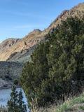 Det South Dakota landskapet med stort sörjer trädet fotografering för bildbyråer