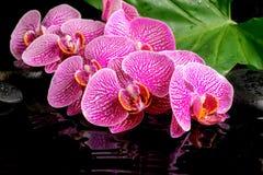 Det Spa begreppet av att blomma fattar den avrivna violetta orkidén Royaltyfri Foto