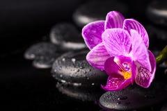 Det Spa begreppet av zenstenar som blommar fattar lilan avrivna orkidén Arkivbilder