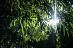 Det spektakulära naturliga ljuset Royaltyfria Foton