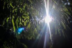 Det spektakulära naturliga ljuset Arkivfoto