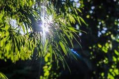 Det spektakulära naturliga ljuset Arkivbild
