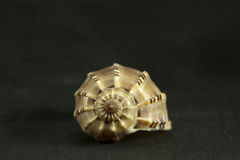 Det spiral skalet Royaltyfria Foton
