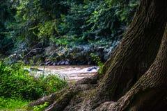 Det stora bruna trädet Royaltyfria Bilder