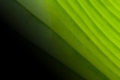 Det stora gröna bladet till den nya naturen är härlig bakgrund Arkivbilder