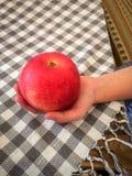 Det stora läckra röda äpplet i childs räcker inomhus över en rutig tabelltorkduk fotografering för bildbyråer