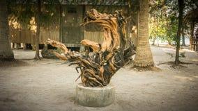 Det stora trä eller trädet rotar som tillbehör och monumentet på mitt av strandsemesterortön royaltyfria bilder