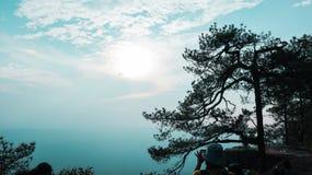 Det stora trädet är i överkanten av Phu arkivbilder