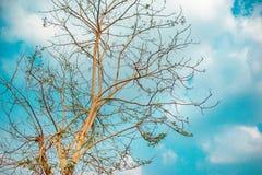 Det stora trädet har en höjdpunkt royaltyfri bild