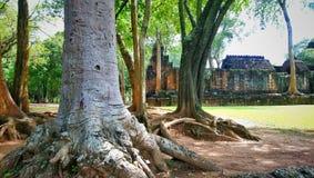 Det stora trädet, i historisk muangsing för prasat, parkerar i Kanchanaburi, Thailand arkivbild