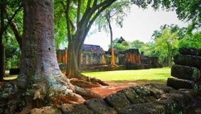 Det stora trädet, i historisk muangsing för prasat, parkerar i Kanchanaburi, Thailand royaltyfri fotografi