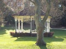 Det stora trädet i mitt av parkerar royaltyfri bild