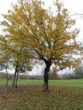 Det stora trädet i parkerar i nedgångfärger royaltyfria bilder