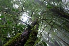 Det stora trädet i regnskog royaltyfri fotografi