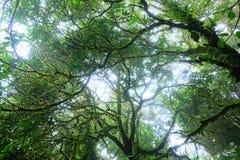 Det stora trädet i regnskog fotografering för bildbyråer