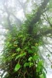 Det stora trädet i regnskog arkivfoto