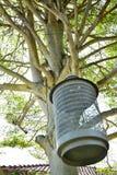 Det stora trädet med den hängande lampan för Bur royaltyfria foton