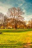 Det stora trädet på parkerar med att koppla av för folk royaltyfri fotografi