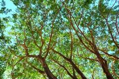 Det stora trädet under himmel arkivbilder