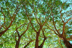 Det stora trädet under himmel royaltyfria bilder