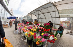 Det stora valet av blommor på provisoriet marknadsför i staden Royaltyfri Bild