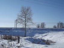 Det stora vinterträdet i rimfrost står i ett fält i en äng Royaltyfri Fotografi