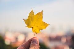 Det stupade bladet för lönnträdet rymde upp med staden av bratislava blurr Arkivbild