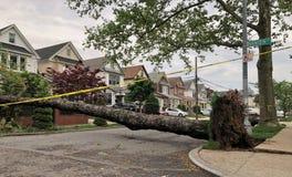 Det stupade trädet och rotar på gatan arkivfoto