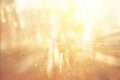 Det suddiga abstrakta fotoet av ljusbristningen bland träd och blänker bokehljus arkivbilder