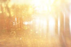 Det suddiga abstrakta fotoet av ljusbristningen bland träd och blänker bokehljus filtrerad bild och texturerat royaltyfria foton