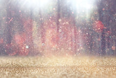 Det suddiga abstrakta fotoet av ljusbristningen bland träd och blänker bokehljus filtrerad bild och texturerat Arkivbild