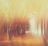 Det suddiga abstrakta fotoet av ljusbristningen bland träd och blänker bokehljus filtrerad bild och texturerat Arkivfoto