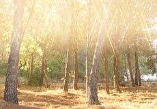 Det suddiga abstrakta fotoet av ljusbristningen bland träd och blänker bokehljus filtrerad bild och texturerat Royaltyfria Bilder