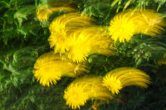 Det suddiga fotoet av blommor med rörelse och strimman verkställer som abs royaltyfri bild