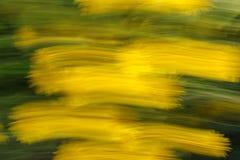 Det suddiga fotoet av blommor med rörelse och strimman verkställer som bac royaltyfria foton