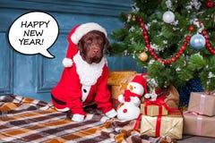 Det svarta labrador retriever sammanträdet med gåvor på julpyntbakgrund fotografering för bildbyråer