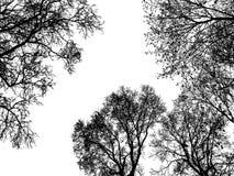 Det svarta trädet skissar med kopieringsutrymme Royaltyfri Fotografi