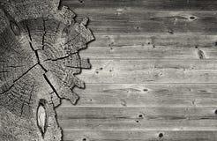 Det svartvita spruckna tvärsnittet av sörjer trädstammen Arkivbild