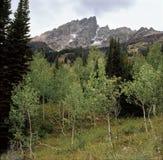 Det Teewinot berget och aspar från älgdamm skuggar, den storslagna Teton nationalparken, Wyoming Royaltyfria Bilder